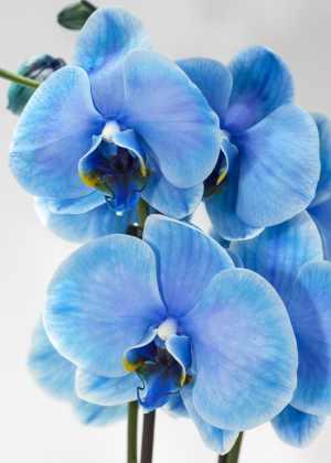 Dicas-para-floração