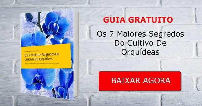 O-guia-das-orquídeas