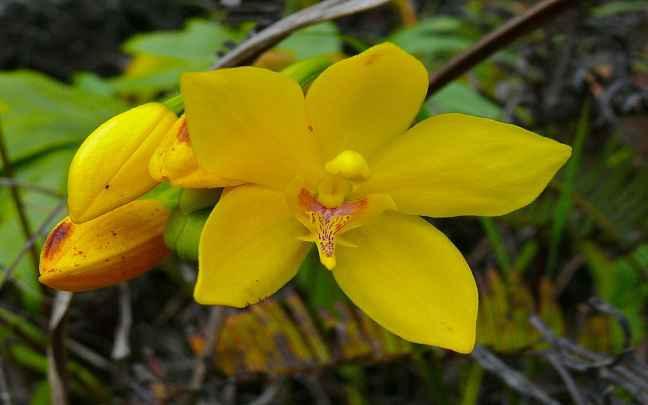 Orquídeas-Terrestres