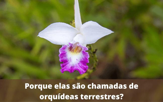 Porque-elas-são-chamadas-de-orquídeas-terrestres