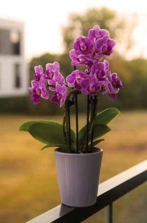 Qual-o-melhor-vaso-para-orquídeas