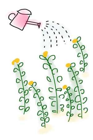 Regar-Phalaenopsis
