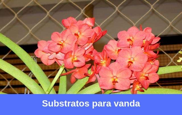 Substratos-para-vanda
