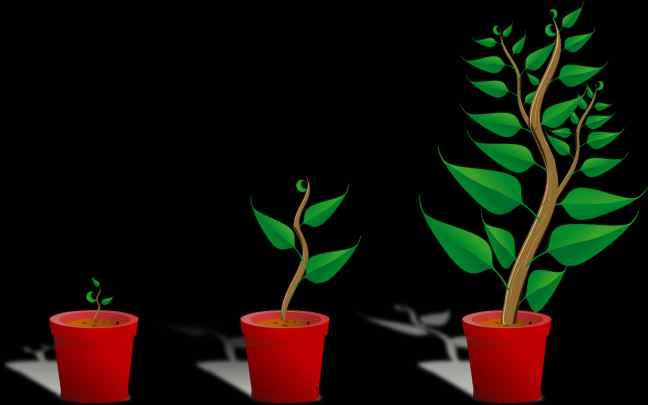 Tipos-de-crescimento