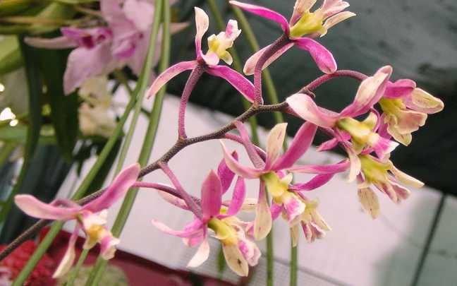 Floração-e-Flores