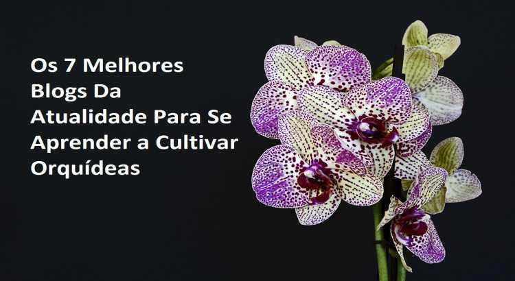 Os 7 Melhores Blogs Da Atualidade Para Se Aprender a Cultivar Orquídeas 14