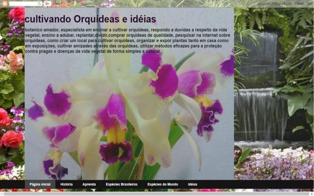Viver-Orquídeas-Ideias