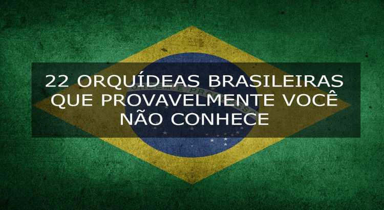 22 Orquídeas Brasileiras Que Você Não Conhece (2019) 20