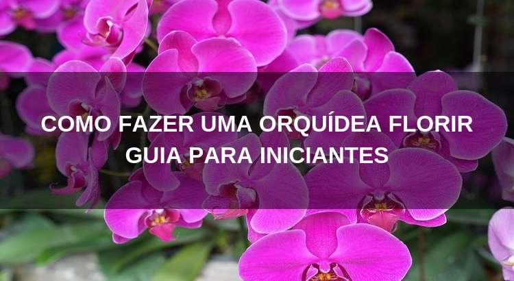 Como Fazer Uma Orquídea Florescer [Guia Para Iniciantes] 28