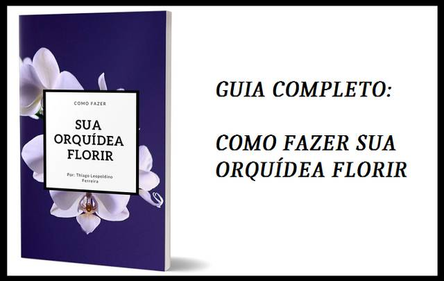 Guia-Completo-Como-fazer-sua-orquídea-florir