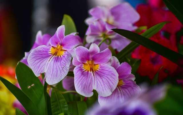 Orquídeas-classificação