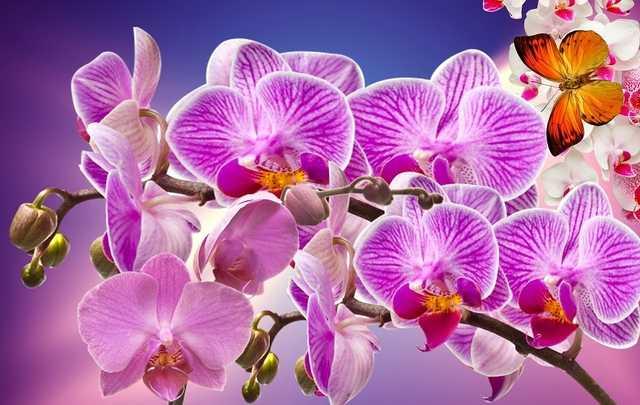 Tipos-de-orquídeas