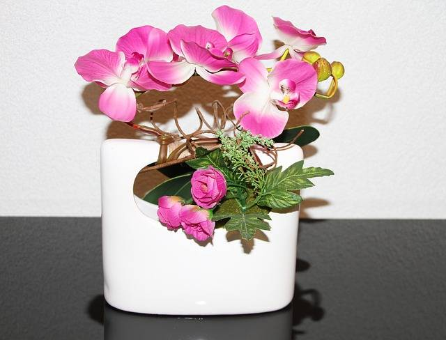Colocar-no-local-correto-a-orquídea