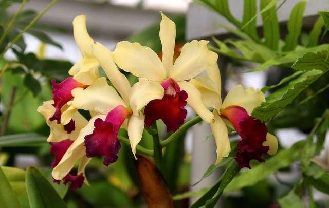 Curiosidades-sobre-orquídeas