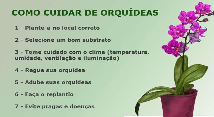 Como Cuidar de Orquídeas – Consiga Florações Incríveis ( 7 Passos ) 13