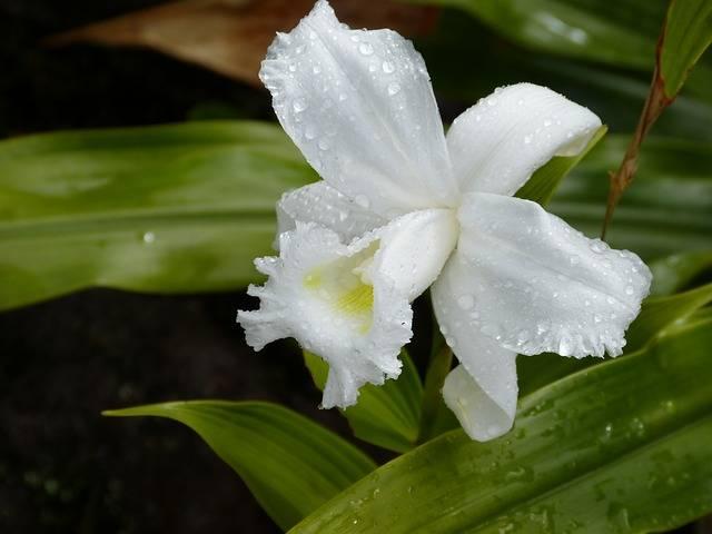 Orquídea-molhada-Como-cuidar-de-orquídeas
