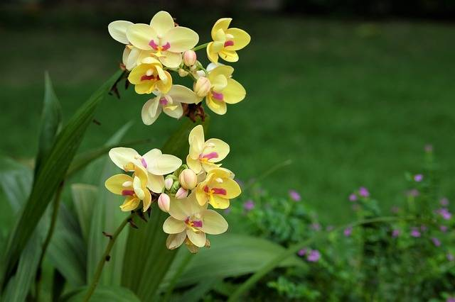 Orquídea-na-natureza
