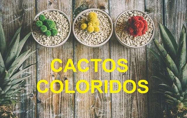 Cactos-coloridos