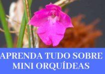 Mini Orquídeas - O Que São, Suas Espécies e Como Cultivá-las 15