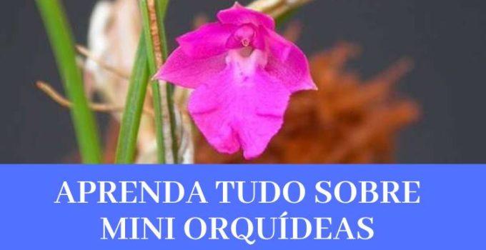 Mini Orquídeas - O Que São, Suas Espécies e Como Cultivá-las 1