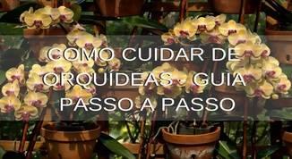 Como-cuidar-de-orquídeas