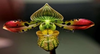 Manchas-nas-folhas-das-orquídeas