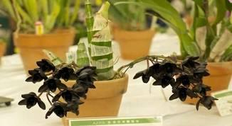 Orquídeas-raras
