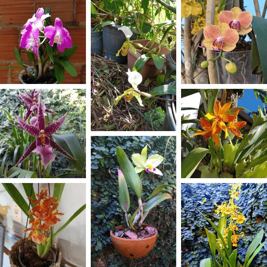 Orquídeas-dos-alunos-01