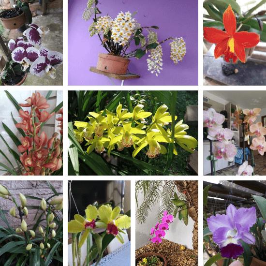 Orquídeas-dos-alunos-02