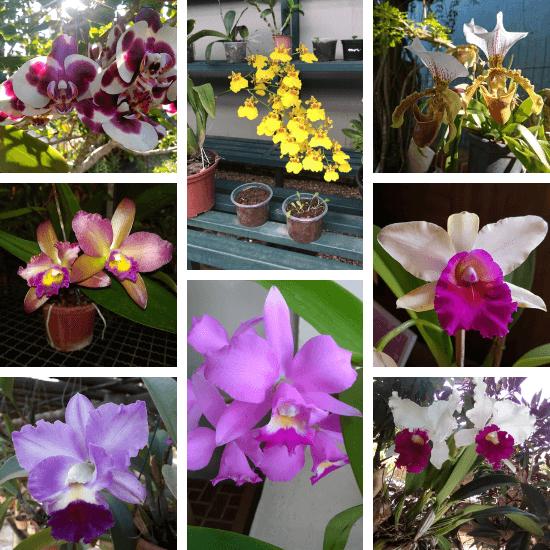 Orquídeas-dos-alunos-03