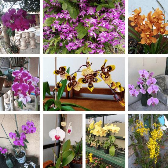 Orquídeas-dos-alunos-04