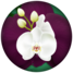 Logo-Orquídeas-1